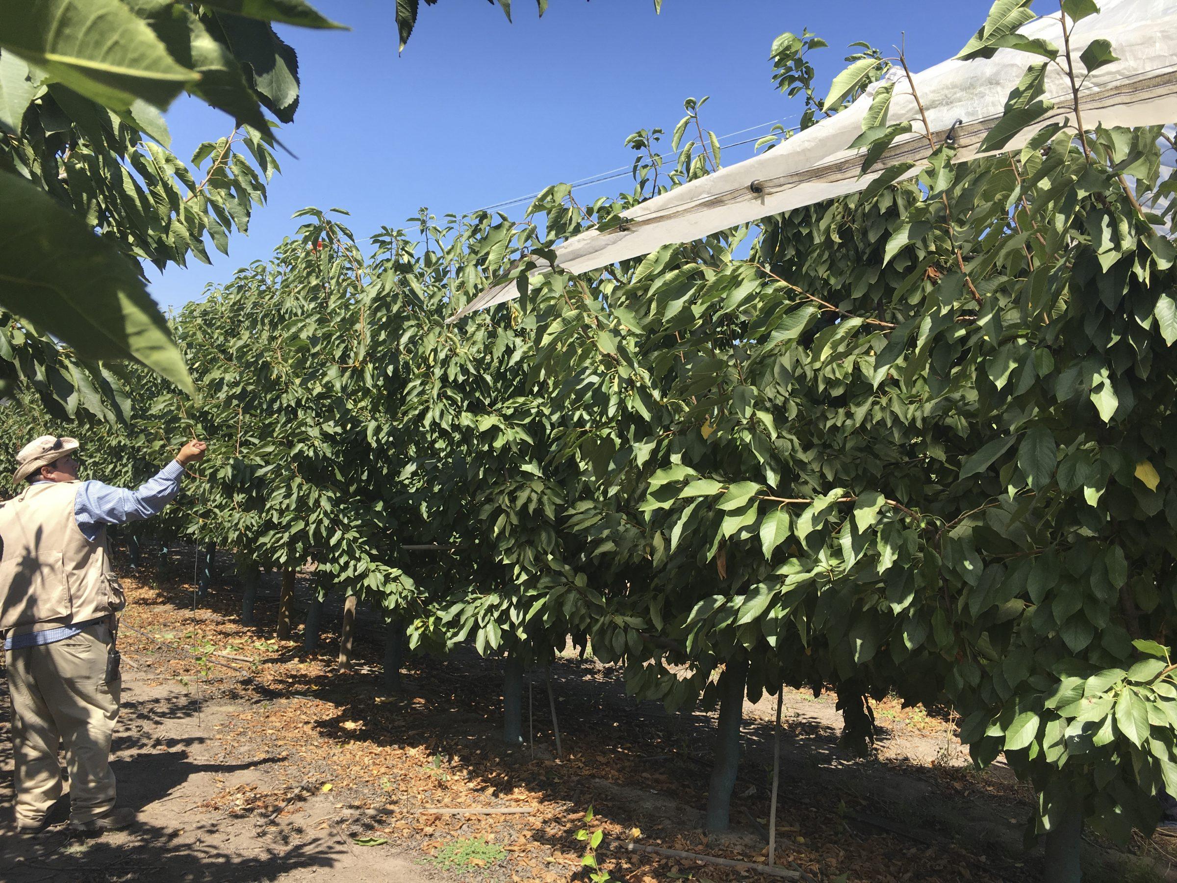 """Prensa: La Solución De Protección De Cultivos Que """"promete Reducir Los Costos De Cultivo De Frutas"""""""